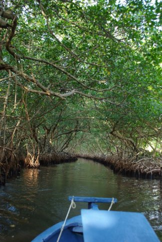 Mangrove tour boat 2